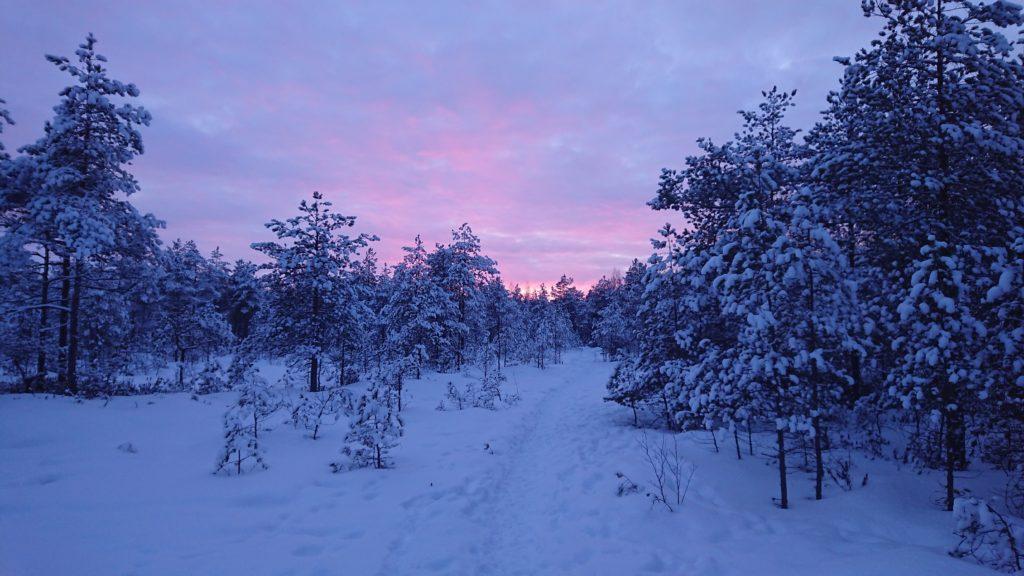 Talvinen metsä auringonlaskussa.